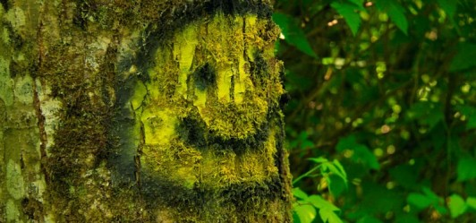 Jest pierwsza reakcja na nasz apel o las Bronaczowa!